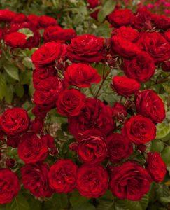 florabundine1