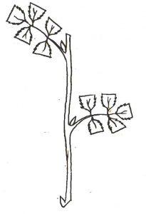zalias-auginis-paruostas