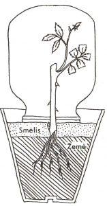 zalio-auginio-isisaknijimas
